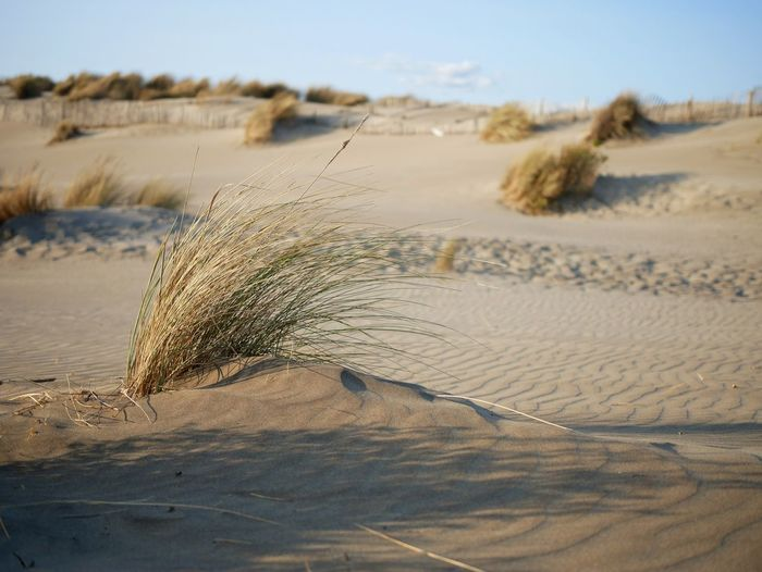 Sand Nature Desert Sand Dune Beach Landscape Day Outdoors No People Animal Wildlife Water Arid Climate Beauty In Nature Animal Themes Sky Close-up Grass Plants Wind Windy