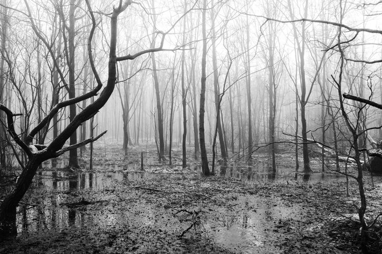 Nebel Ostfriesland Swamp Wood Bare Tree Beauty In Nature Fog Foog Foogy Forest Forest Photography Landscape Moor  Nature No People Outdoors Tree Tree Trunk Winter