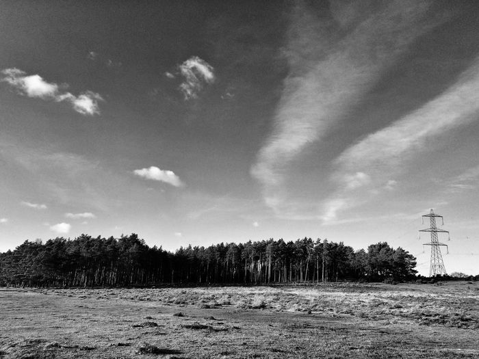 Trees in the New Forest🌲 Tree Nature Forest Field Tranquil Scene Landscape Outdoors Beauty In Nature Electricity Pylon Cloud - Sky Day Scenics Black E White Photography National Park Monochromatic