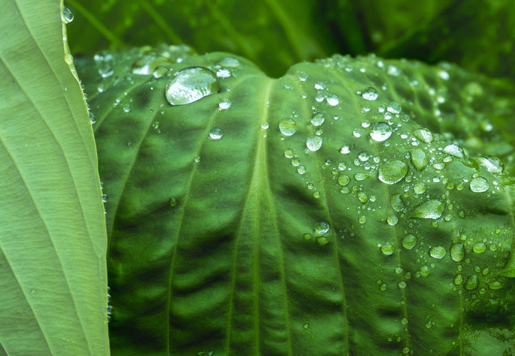 Close-Up Of Wet Leaves On Rainy Day