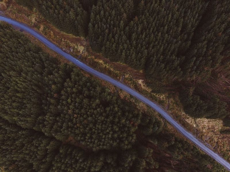 High Angle View Aerial View Nature Road Scenics Tree Transportation Beauty In Nature Landscape Curve No People Tranquility Outdoors Winding Road Day