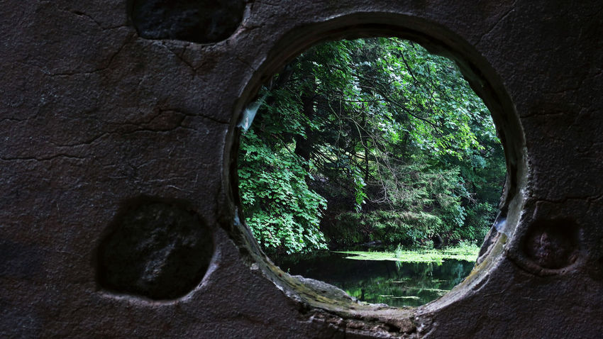 Architecture Built Structure Circle Close-up Day Forest Geometric Shape Green Color Growth Hole Land Nature No People Outdoors Plant Shape Tranquility Tree Tree Trunk Trunk Well