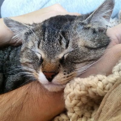 Madame Wassilita genießt die volle Aufmerksamkeit von Mama&Papa 😺 Wassilita_the_cat Hasoliebe Schlafendetiere_tsez