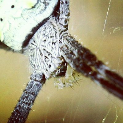 Spider head. Spider Spiderworld Ig_spider Tgif_macro tgif_insects kings_insects