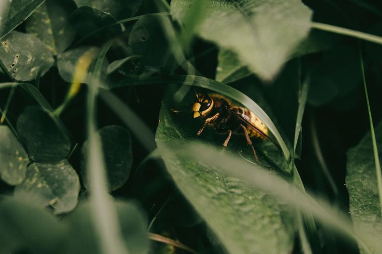 Insect Animal Themes Nature One Animal Plant Close-up Animals In The Wild Leaf Animal Wildlife No People Beauty In Nature Day Outdoors Survival Kerber Nature