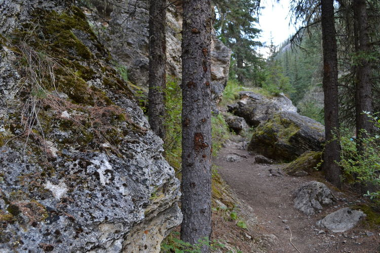 The trail awaits... . Anticipation Beckoning Hike Mountains Natural Nature Nature On Your Doorstep Nature Photography Raw Photography Rocks