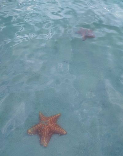 Starfish Water