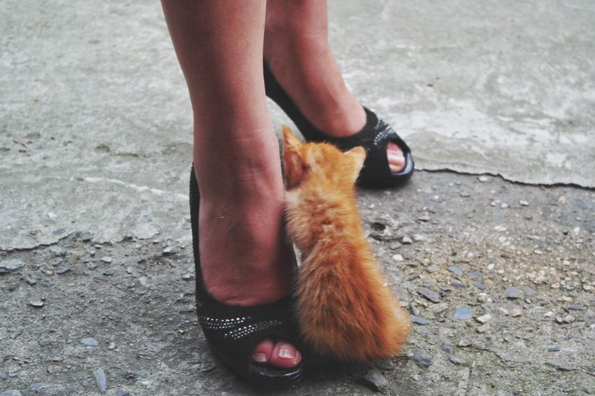 One Animal Real People Low Section Pets Human Leg One Person Domestic Animals Outdoors Mammal Day Domestic Cat Lifestyles Human Body Part Women Close-up People Cat Village Travel Destinations Taiwan The Street Photographer - 2017 EyeEm Awards Ginger Cat EyeEmNewHere The Photojournalist - 2017 EyeEm Awards Cat Kitten The sad truth is this cute little cat had feline pink eye, and hence will die really soon because the village did not have any vetinary clinic :( RIP
