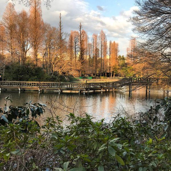 EyeEmNewHere Outdoors Tree Day Inokashira Park Nature