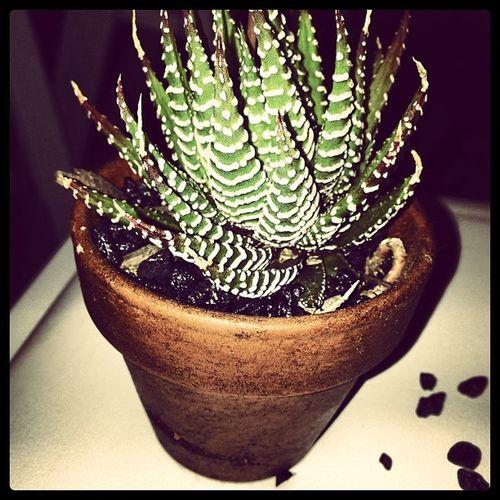 Jazminandjordanwedding my new cacti @haydenyacobucci Wedding