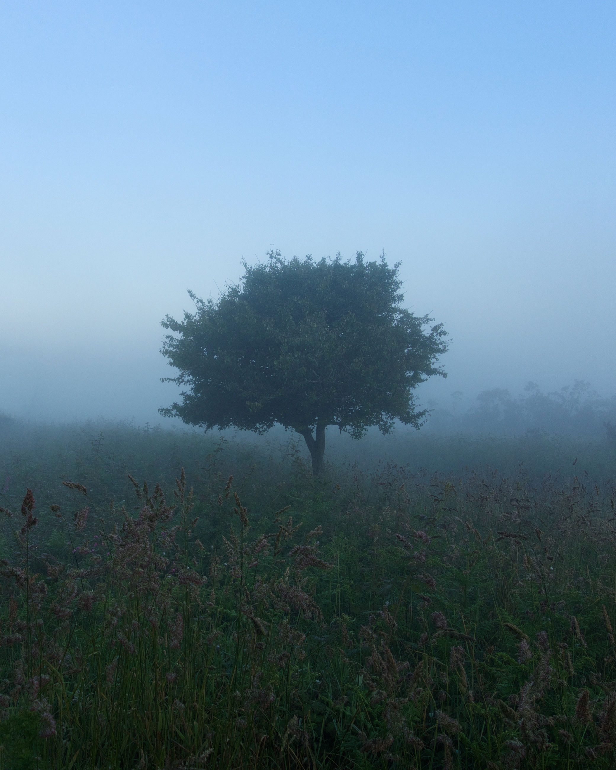 plant, fog, tree, beauty in nature, tranquility, land, growth, field, tranquil scene, sky, nature, environment, landscape, no people, scenics - nature, non-urban scene, grass, day, outdoors, hazy, isolated
