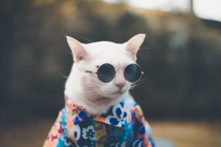 Close-up of cat wearing sunglasses