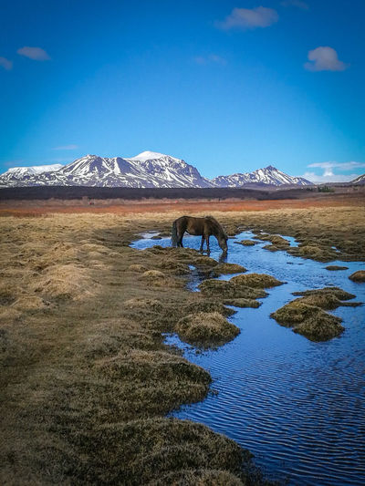 Horse River Blue Water Blue Sky Blue Sky Relaxing Relaxation Calm Tranquility Blue Water Beautiful Destinations No People Outdoors Water Mountain Snow Blue Beach Lake Sky Landscape Mountain Range Snowcapped Mountain Pony Tranquil Scene Rocky Mountains Countryside Scenics Idyllic