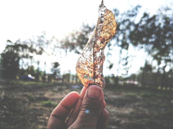 Dry leaf Leaf Vintage Old New Leaf Human Hand Holding Sky Close-up