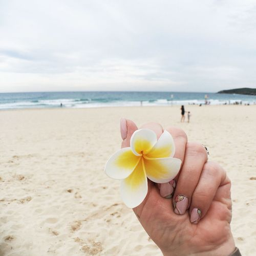 Close-Up Of Hand Holding Flower On Beach