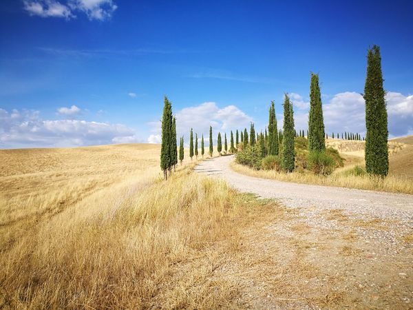 Cloud - Sky Sky Tree Nature Landscape Outdoors Day Pine Tree Rural Scene Beauty In Nature No People Growth Scenics Cipressi Grano Tuscany Countryside Tuscany Toscana Siena Siena Italy Nature Beauty In Nature