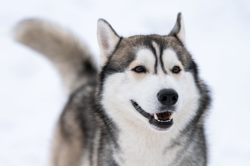 Close-up of dog standing on snow covered land