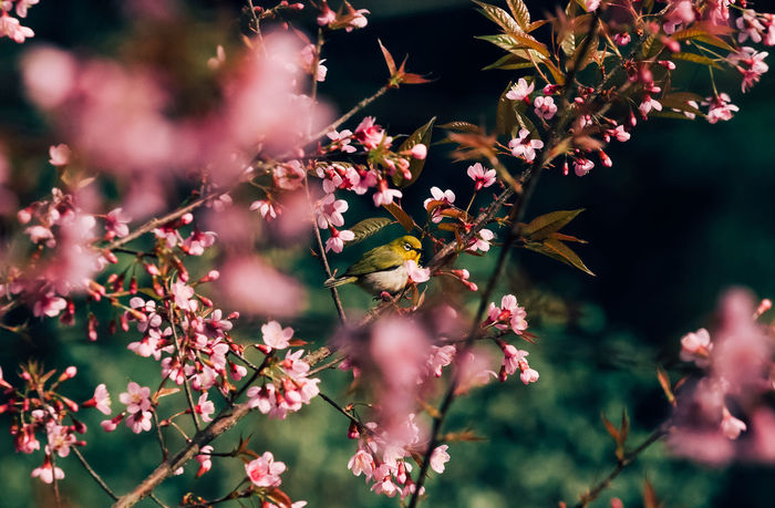 Beauty In Nature Bird Bird Photography Blossom Branch Day Flower Flower Head Growth Nature No People Outdoors Springtime Tree