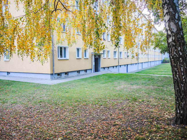 Architecture Autumn Autumn Colors Berlin Berliner Ansichten Branch Building Exterior Built Structure City Cityscapes Coolpix7800 Day Grass Green Green Color Growth Herbst Herbststimmung Lawn Nikon Outdoors Surface Level Tree Tree Trunk Yard
