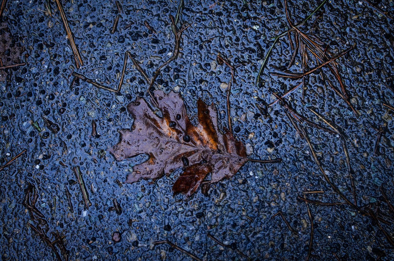 High angle view of maple leaves on wet land