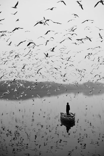 The one man trapped among the group of Siberian birds Delhi Getty Images Stories from the City Yamuna Fisherman Large Group Of Animals Nature One Person Real People Reflection Selling Silhouette Sky Streetphotography