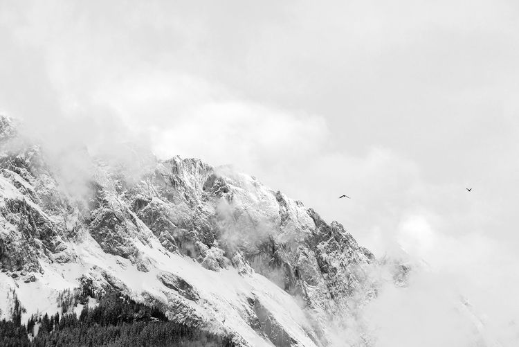 Enjoying The Moment Nature Black And White Magic Tranquility Quiet Moments Bavarian Alps Black & White Bird Animal Wildlife Tree Mountain Snow Flying Winter Sky Cloud - Sky Landscape Foggy Flock Of Birds Snowcapped Mountain Fog Spread Wings Snowcapped Weather Scenics Calm Idyllic Non-urban Scene Countryside