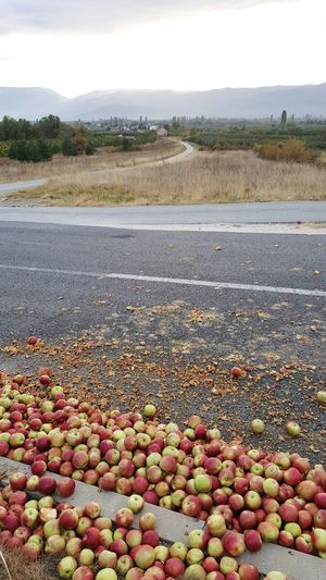 apples on the road Dissipation Accident Macedonia Road Contry Road Rural Scene Country Road Sunset Appleseason Autumn Asphalt Road Agriculture Food And Drink Fall Countryside Roadways Fallen