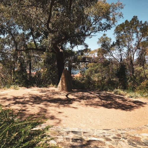 Cultural Place Indigenous Culture Celebration Pinnacle Rock Social Gathering Nature Setting Hire Venue Beedawong Meeting Place Visitors Tourists Elevated Walkway Lotterywest Federation Walkway Kings Park And Botanic Garden Western Australia October 2016 Tree Plant Sunlight Nature Growth Day Park - Man Made Space Scenics - Nature Park Field Sky Shadow Beauty In Nature Outdoors Leisure Activity