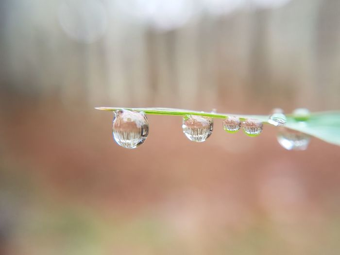 Close-up of water drop on grass during winter