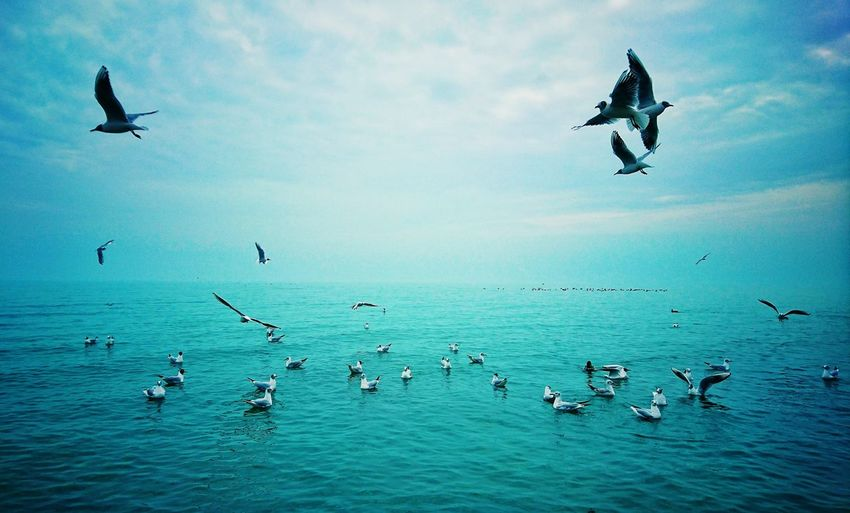 Seagulls over blue sea against sky