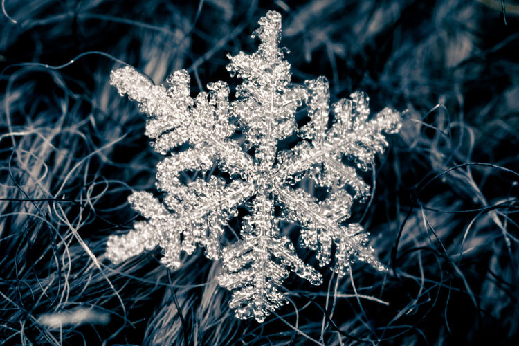 Actually, I already said goodbye to the winter. But let's make the best of it! 😊 Ice Ice Crystal Macro Photography Beauty In Nature Close-up Cold Temperature Eisenbahnfotografie Macro Nature No People Snow Snowflake Winter