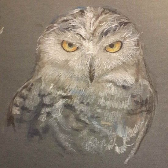 Owl Derwent Drawing Moscov amazing_vivid animal bird night amazingvivid сова совушка