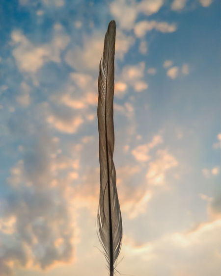 Low angle view of feather against sky during sunset