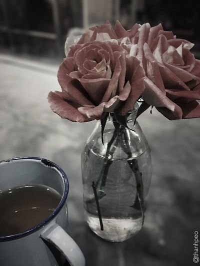 Growing up not easy Rosy Coffee Break Flower Vase Focus On Foreground Fragility Nature No People Close-up Indoors