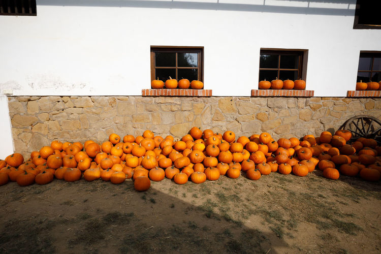 View of pumpkins by house
