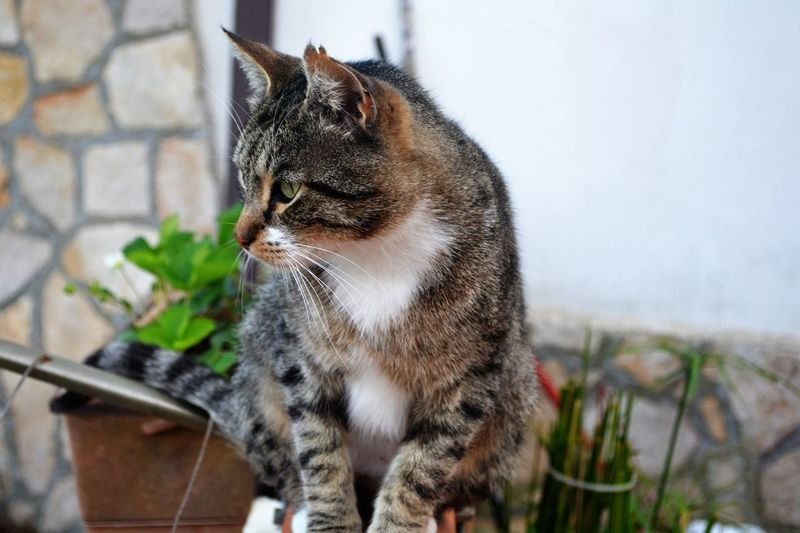 Alertness Animal Animal Head  Animal Love Animal Photography Animal Themes Animal_collection Close-up Day Domestic Cat Feline Felino Focus On Foreground Looking Away Mammal Nature No People Outdoors Portrait Selective Focus Whisker