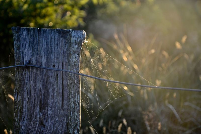 Nature Outdoors Day Evening Evening Light No People Wood - Material Wooden Post Close-up Web Spider Web Sunset Nature Nikon D5200 Nikonphotography Nikon Focus On Foreground Nature Photography Nature Collection Naturelovers Nofilter Sankt Peter-Ording Germany Nordsee EyeEmNewHere The Great Outdoors - 2017 EyeEm Awards Live For The Story Lost In The Landscape