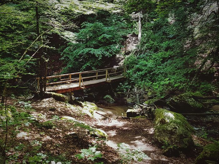 bridge in the mounting Beauty In Nature Small River In Forest Small Bridge In The Woods Path In Nature Backgrounds Full Frame Tree Shadow High Angle View Sunlight Close-up EyeEmNewHere