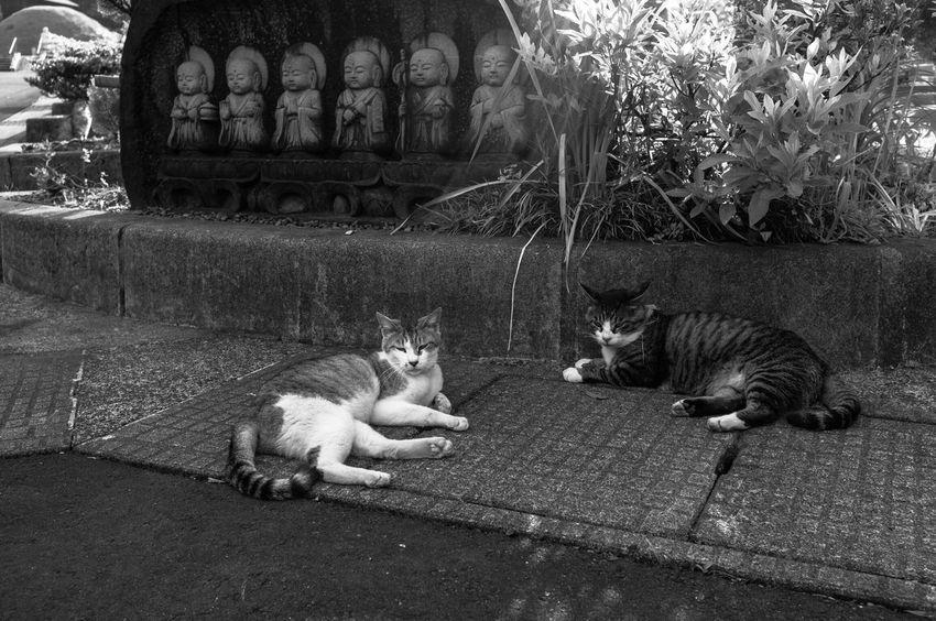 猫と地蔵 First Eyeem Photo Monochrome Japan Cat Art Photography Jizo Streetphotography Snap Snapshots Of Life 日本 福井県 写真家 Phtographer Artな写真 モノクロ スナップ EyeEmBestPics Hello World Blackandwhite