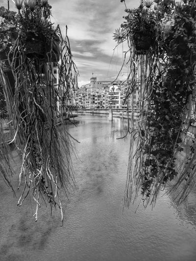"Buenas noches !! "" La manera de mirar moderna es ver fragmentos. "" Susan Sontag Girona Temps De Flors 2016 Gironatempsdeflors Gironamenamora Bnw_collection Bnw_captures Bnw Bnw_city Bnw_shot Bnw Photography Bnw Photography From My Point Of View Girona"