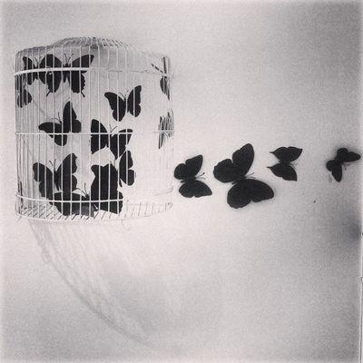 Instamood Instahub Instaart Instadhaka Insomniac Instago Butterfly Cage Freethinking Freedom Kazi Tahsin Agaz Apurbo Dhaka Bangladesh Dhakagraam Jj