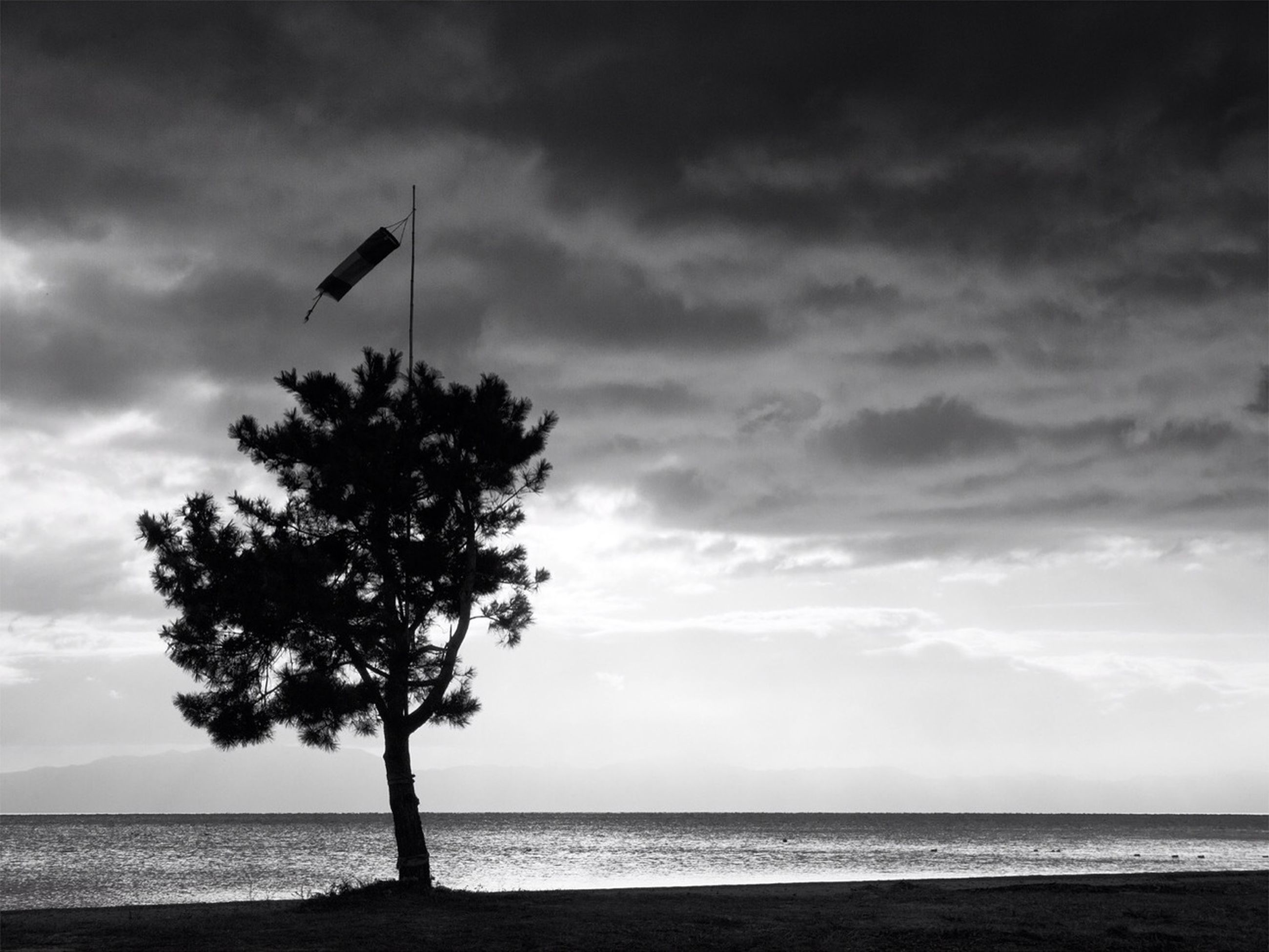 sea, horizon over water, sky, tranquil scene, cloud - sky, water, tranquility, beach, scenics, beauty in nature, cloudy, cloud, nature, silhouette, shore, tree, idyllic, outdoors, overcast, remote