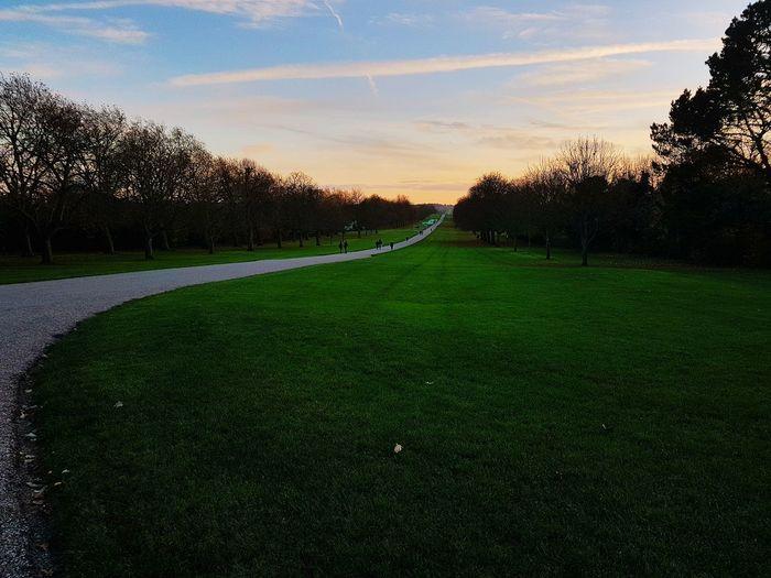 Longwalk Nature EyeEm Selects Photography Sunset Park Tree Sunset Rural Scene Sky Grass Landscape Green Color Growing