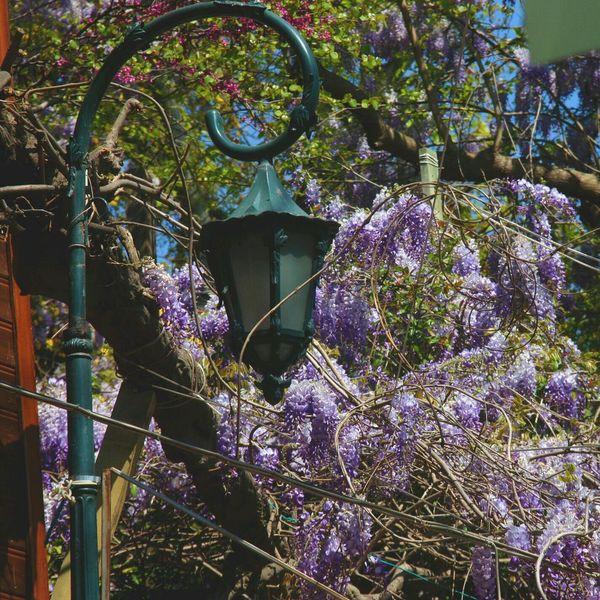 By_me Mydubai تصويري  Flowers