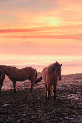 Horse standing on field against orange sky
