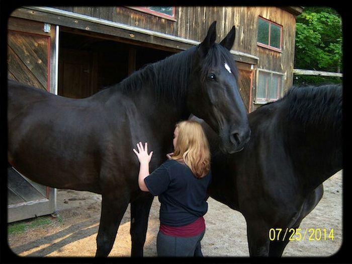 """Lets play that game """"my horse is bigger than your horse"""" i promise i will win Percherons Draft Horses 19 Hands New Hamps"""
