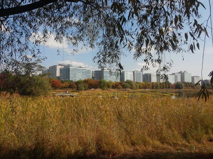 일산호수공원 ilsan Ilsan