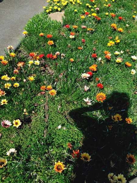 Pretty Flower Springtime Plants Outdoors
