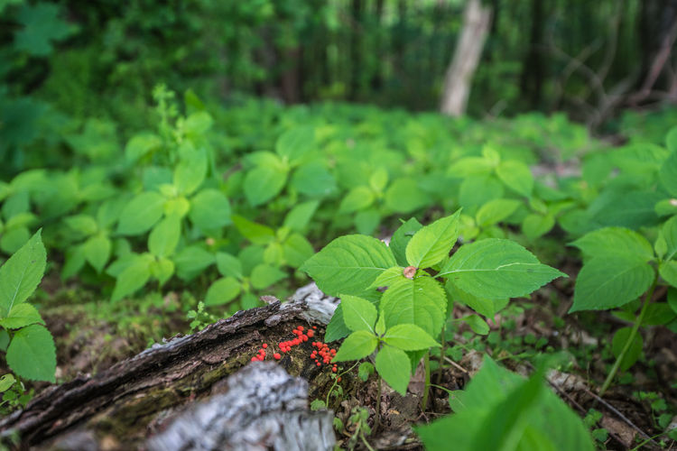 Close-up of fresh green plant against trees