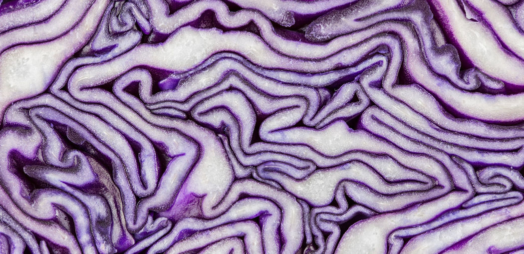 the pattern of a sliced red cabbage Lines Red Cabbage Abstract Background Backgrounds Cabbage Cabbages Close-up Cross Section Decoration Extreme Close-up Food Food And Drink Full Frame Healthy Eating Indoors  Meander Natural Pattern Nature No People Pattern Purple Science Textured  Vegetable
